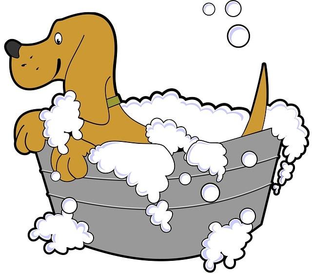 Cómo bañar adecuadamente a tu perro